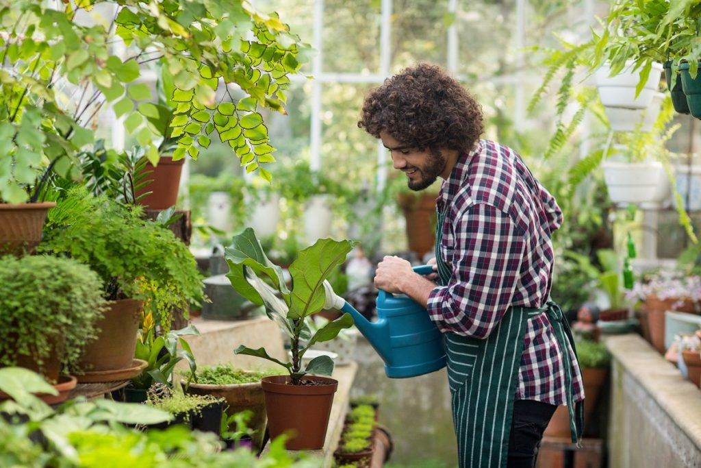 Man watering plant in an indoor garden