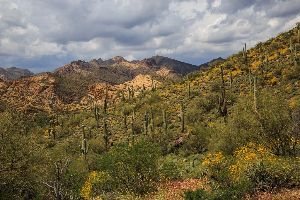 Desert Spring Bulldog Canyon- Arizona, USA